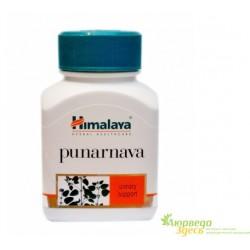 Пунарнава Боерхавия Хималая, Punarnava Himalaya, лечение инфекций