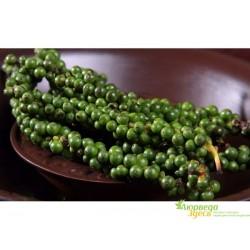 Перец зелёный, Piper nigrum L.
