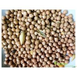 Нут первый сорт, Турецкий Горох, один из самых популярных и вкусных бобовых, Chana Dal