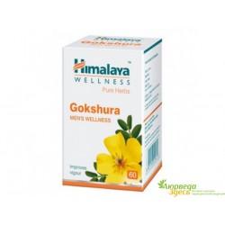 Гокшура, Якорцы Стелющиеся, Хималая, GOKSHURA Himalaya, противовоспалительное, стимулирующее и укрепляющее средство
