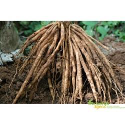 Шатавари корень сушёный, Dry Shatavari Asparagus Racemosus, тоник и омоложение!