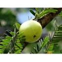 Амла сушёная, 100 г. Amla fruit drying, Emblica officinalis, повышение иммунитета и всё, что нужно для роста волос, Аюрведа