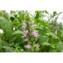 Благовоние весовое пыльцовое Пачули, 250 г., Agarbatti Patchouli, 250grm, Аюрведа
