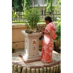 Ростки Тулси, Базилик Священный, Туласи, коричневые, Tulasi , Tulasi Devi, Ocimum Sanctum Tulsi, Holy Basil
